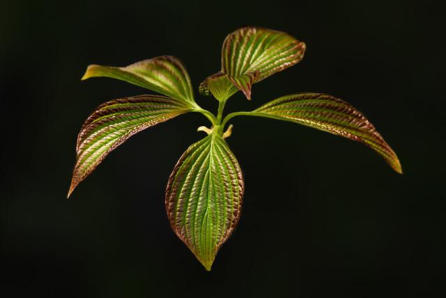 Leaf Botanical Experiment 7005