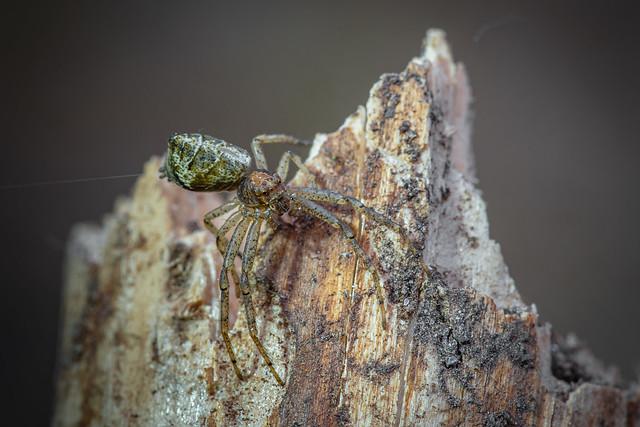 Unknow spider