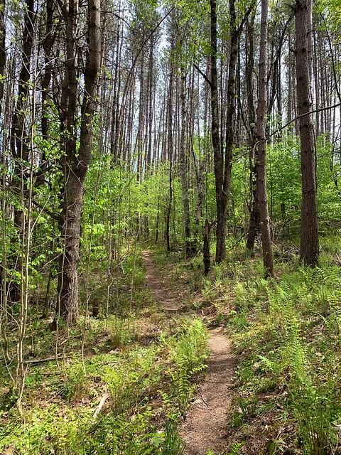 0:06:41 (7%): hiking vermont billballardtrail norwich unitedstatesofamerica