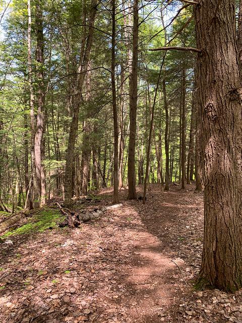 0:12:59 (13%): hiking vermont billballardtrail norwich unitedstatesofamerica