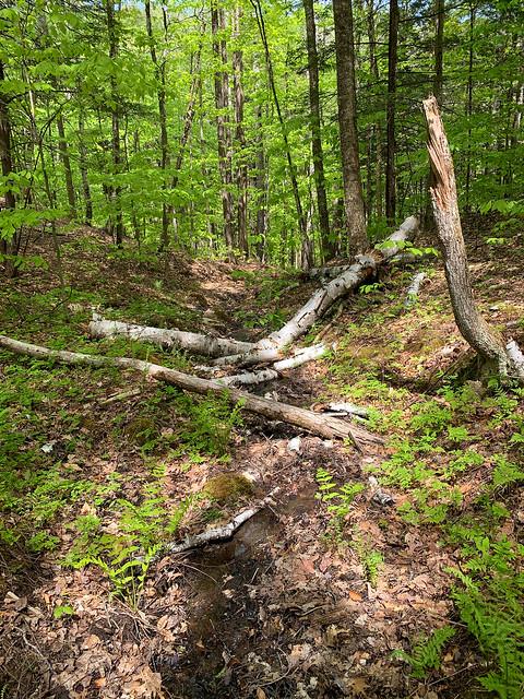 0:17:20 (18%): hiking vermont billballardtrail norwich unitedstatesofamerica