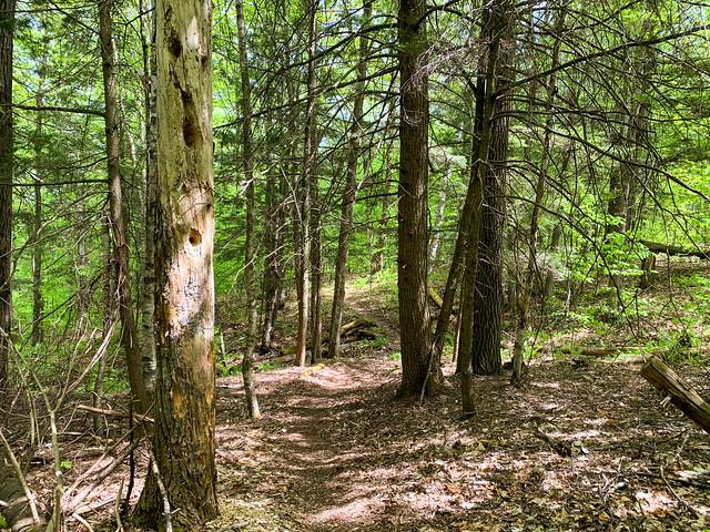 0:32:46 (34%): hiking vermont billballardtrail norwich unitedstatesofamerica