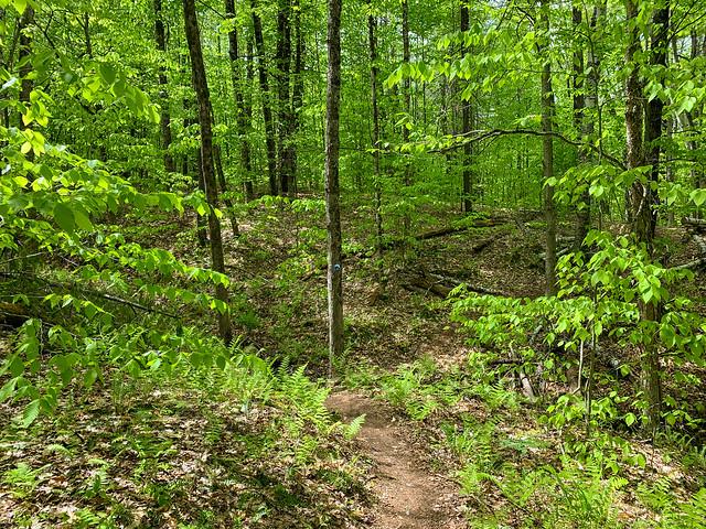 0:48:19 (50%): hiking vermont billballardtrail norwich unitedstatesofamerica