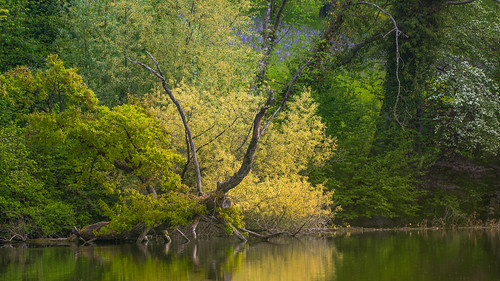 Chatzensee in spring