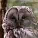 """<p><a href=""""https://www.flickr.com/people/96231272@N02/"""">tbird1972</a> posted a photo:</p>  <p><a href=""""https://www.flickr.com/photos/96231272@N02/49931395281/"""" title=""""20200517_tierpark-036""""><img src=""""https://live.staticflickr.com/65535/49931395281_6d595e5d48_m.jpg"""" width=""""240"""" height=""""153"""" alt=""""20200517_tierpark-036"""" /></a></p>"""