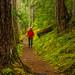 Hiker Along Quilcene