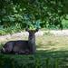 """<p><a href=""""https://www.flickr.com/people/96231272@N02/"""">tbird1972</a> posted a photo:</p>  <p><a href=""""https://www.flickr.com/photos/96231272@N02/49931405946/"""" title=""""20200517_tierpark-026""""><img src=""""https://live.staticflickr.com/65535/49931405946_d76065aa06_m.jpg"""" width=""""240"""" height=""""160"""" alt=""""20200517_tierpark-026"""" /></a></p>"""