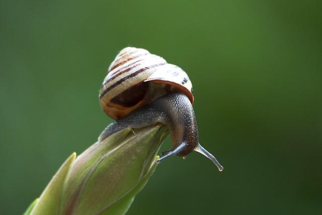 snail climbs the yukka