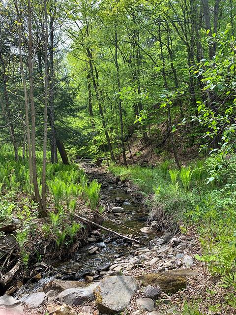 1:34:09 (97%): hiking vermont billballardtrail norwich unitedstatesofamerica