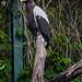 """<p><a href=""""https://www.flickr.com/people/96231272@N02/"""">tbird1972</a> posted a photo:</p>  <p><a href=""""https://www.flickr.com/photos/96231272@N02/49931726187/"""" title=""""20200517_tierpark-050""""><img src=""""https://live.staticflickr.com/65535/49931726187_3a38690a47_m.jpg"""" width=""""169"""" height=""""240"""" alt=""""20200517_tierpark-050"""" /></a></p>"""