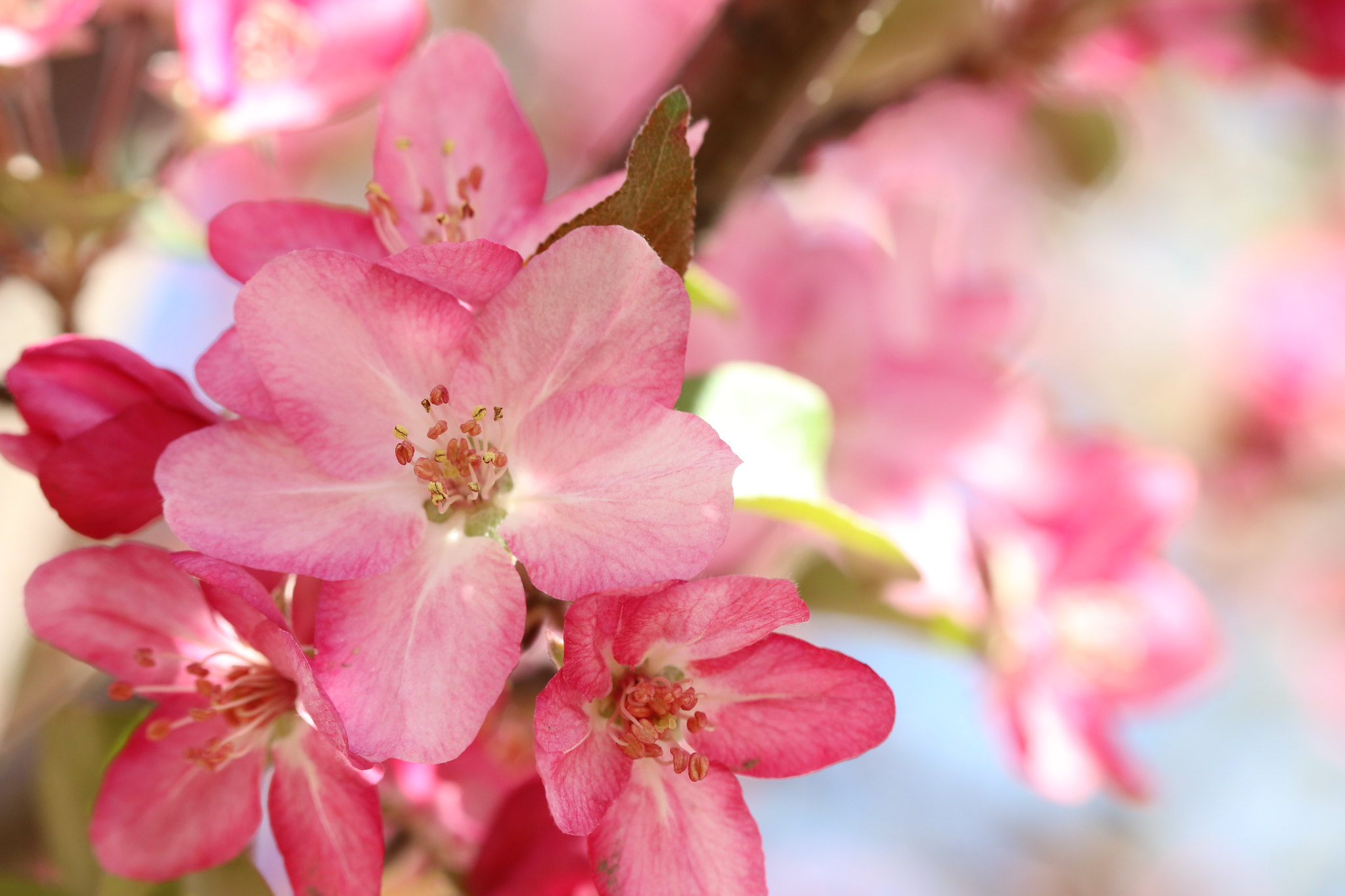 Bright in Bloom (SOTC 358/365)