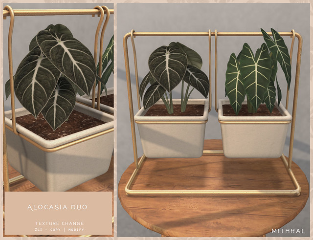 Mithral Apothecary - The Alocasia duo @ equal10
