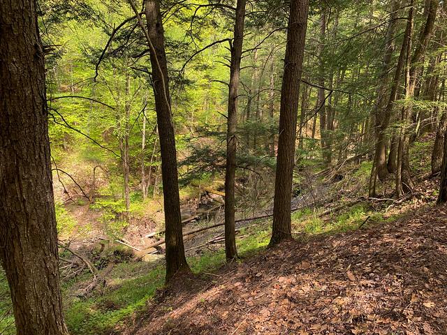 0:14:12 (15%): hiking vermont billballardtrail norwich unitedstatesofamerica