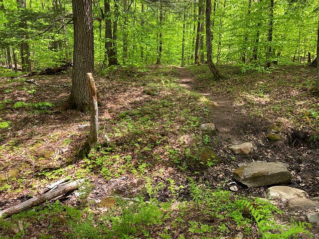 0:17:02 (18%): hiking vermont billballardtrail norwich unitedstatesofamerica