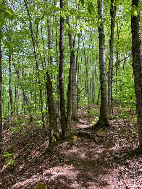 0:21:21 (22%): hiking vermont billballardtrail norwich unitedstatesofamerica