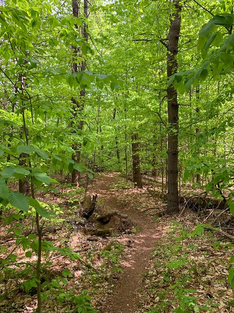 0:36:09 (37%): hiking vermont billballardtrail norwich unitedstatesofamerica