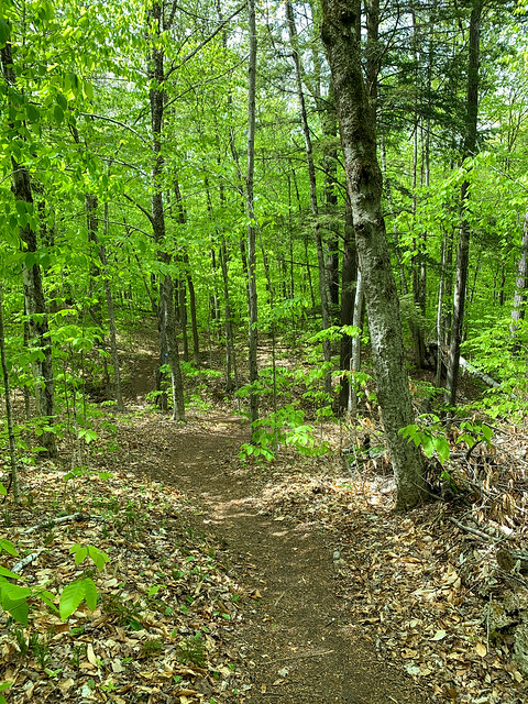 Upper Bill Ballard Trail: hiking vermont billballardtrail norwich unitedstatesofamerica