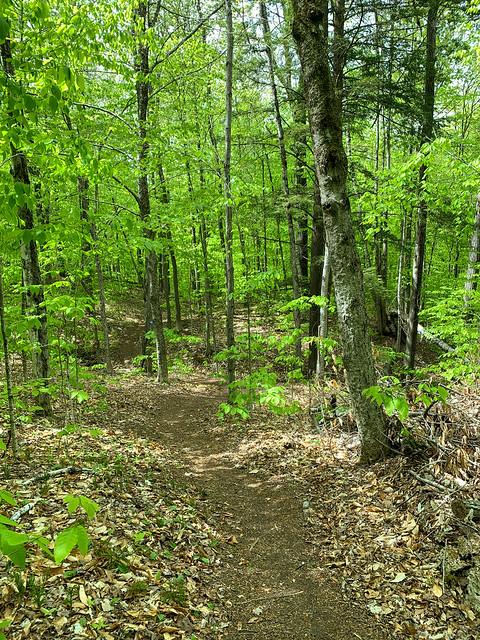 0:52:36 (54%): hiking vermont billballardtrail norwich unitedstatesofamerica