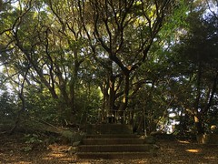 Forest shrine on Yayoi Road