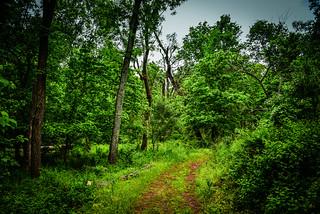 Kincora Nature Trail - Ashburn VA