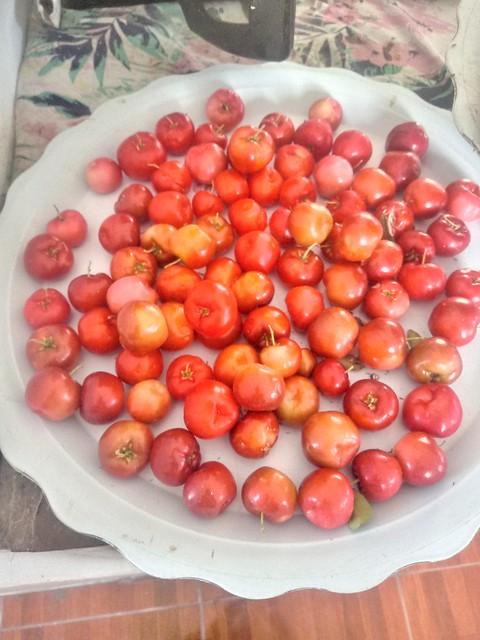 Continúan las frutas del tiempo, ahora un poco de Guaraná