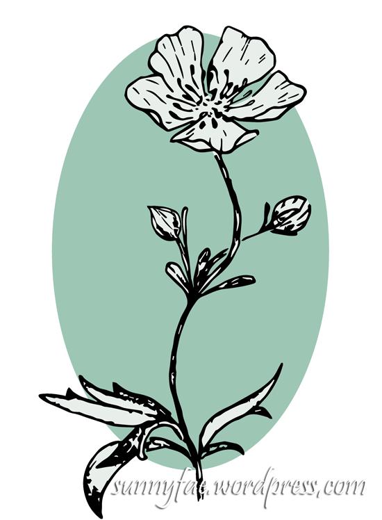 buttercups illustration