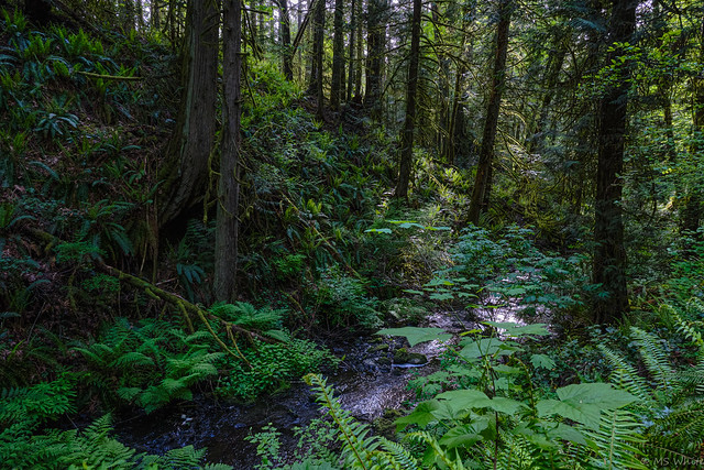 A creek runs through it.