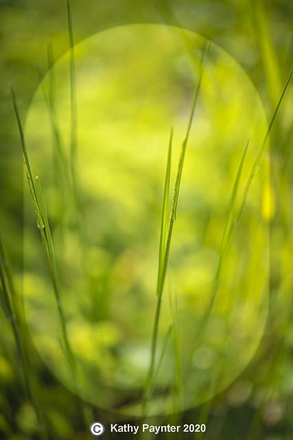 Grass 1558