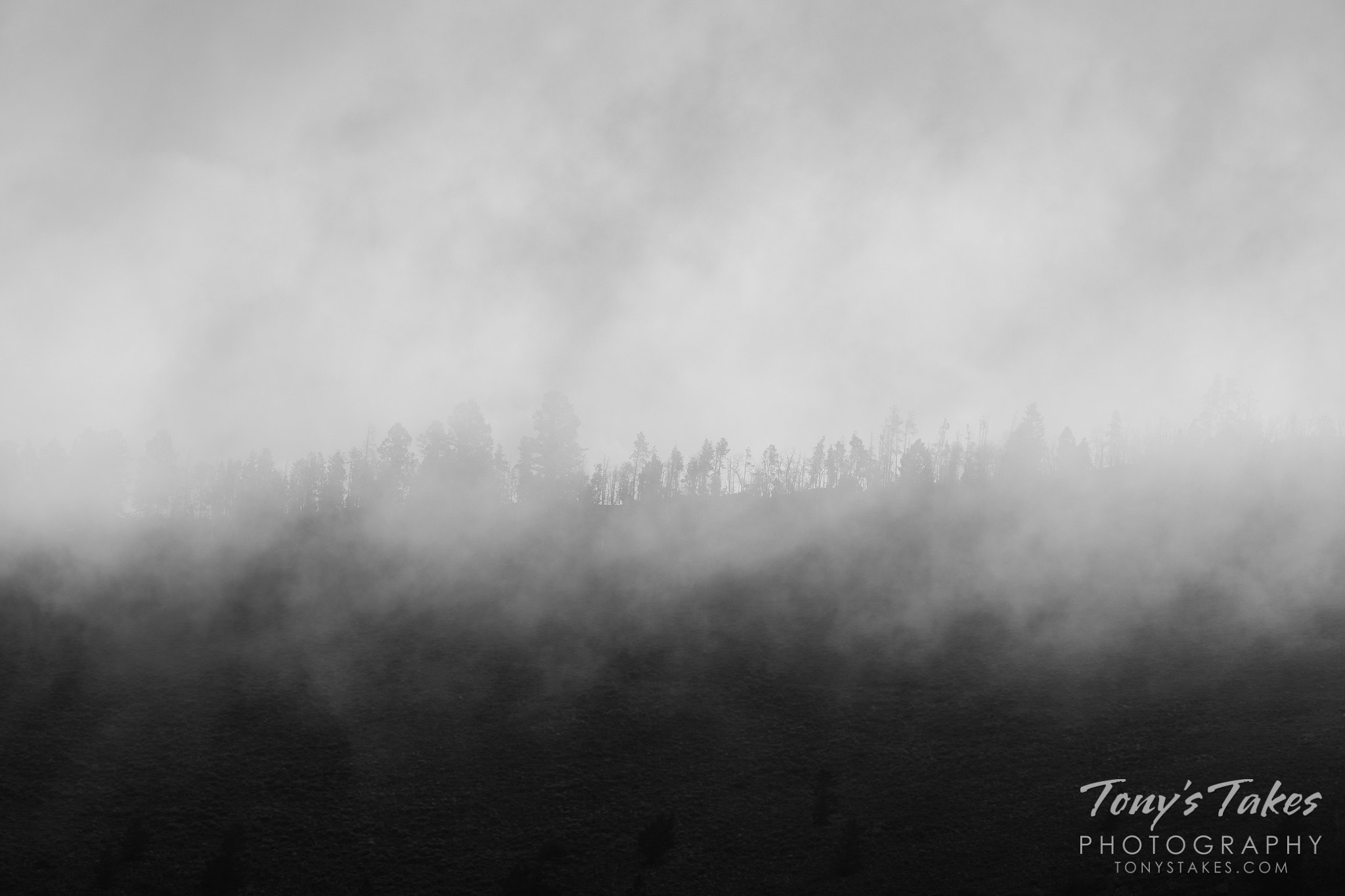 Mountaintop trees shrouded in low clouds. (© Tony's Takes)