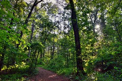 Get Outside and Go Walking (Congaree National Park)