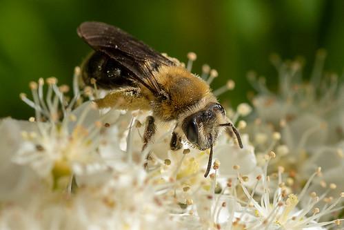 Work hard, do good, bee incredible!