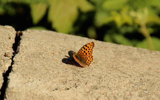 ... and then, came a pretty butterfly with a heart-shaped shadow