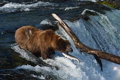 Brooks Falls, Alaska, July 2018
