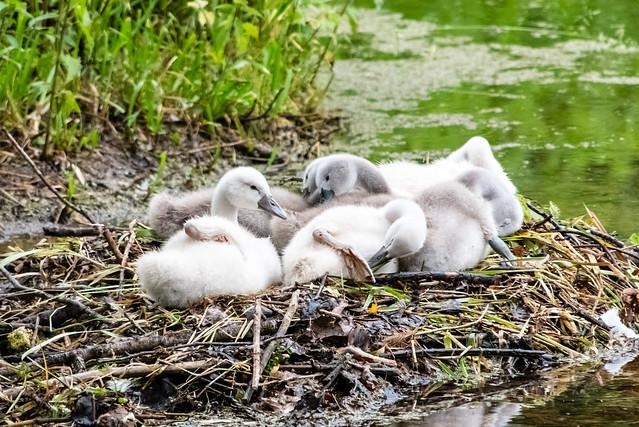 Entspannen im Nest / Relax in the nest