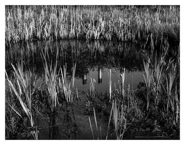 Reeds and smokestacks