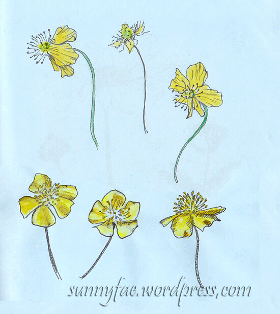buttercups watercolour and fine liner
