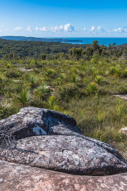 Australian Bush with Tessellated Rock