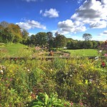 Blooming Miller Park, Preston