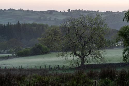 nidderdale yorkshire morning spring sunrise nature outdoors rural countryside england uk washburnvalley