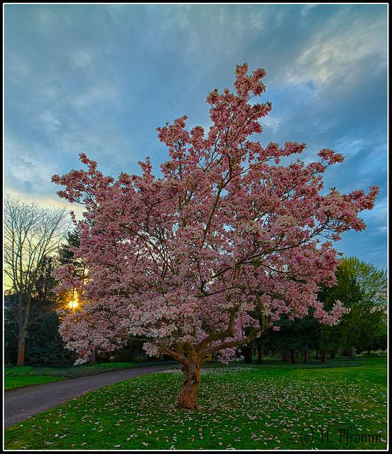 Frühling im Abendrot