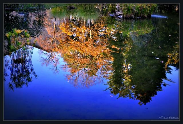 Reflets des arbres dans le plan d'eau du parc