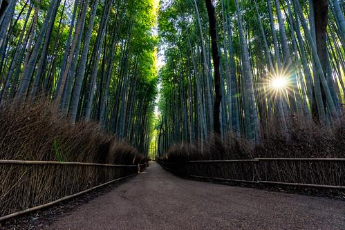 bamboo bambooforest sunrise starburst sun nature naturephotography landscape landscapephotograhy kyoto japan japanese arashiyama sony sonyalpha a7m2 serene picoftheday photooftheday travel travelgram travelling travelphotography holiday vacation
