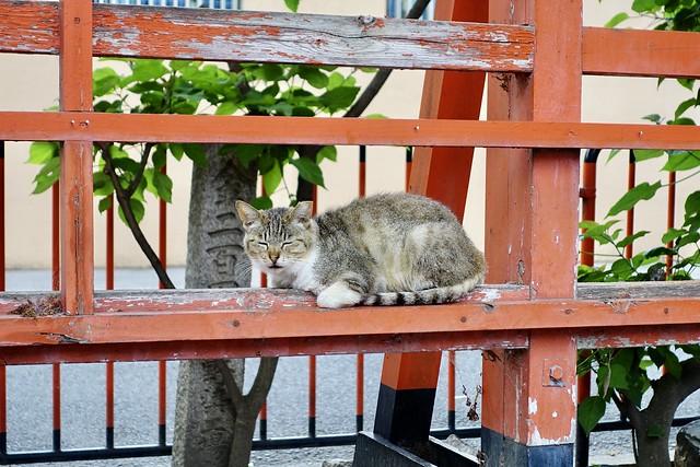 Today's Cat@2020ー05ー25