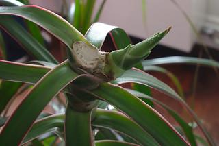 la plante se refait une tête
