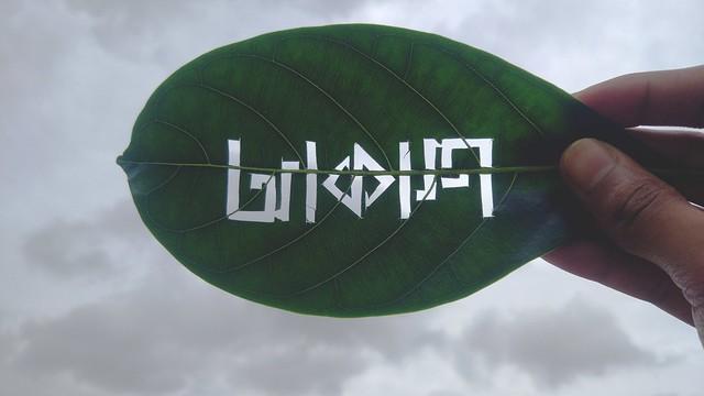 Ambigram on leaf (Leafogram) - আকাশ