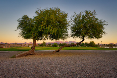 aberi trees arizona az usa lakehavasucity tramonto sunset landscape nikon d750