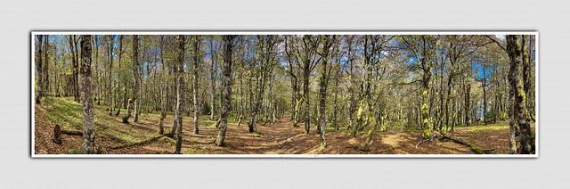 Forêt de la Schlucht - Haut Rhin