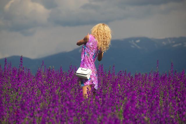 В лилавата нива