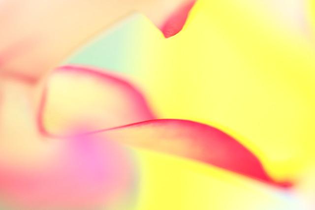 the sorbet swirl