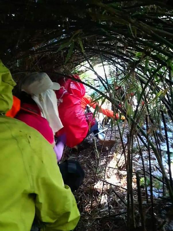 ROMA: crawled underneath bent bamboo woods